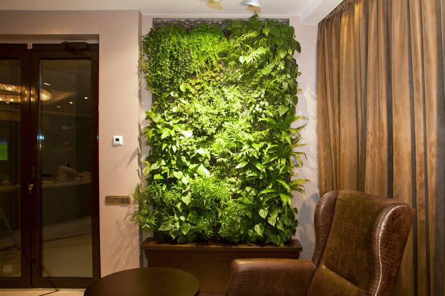Декоративный мох — особенности использования в дизайне дома и сада (75 фото)
