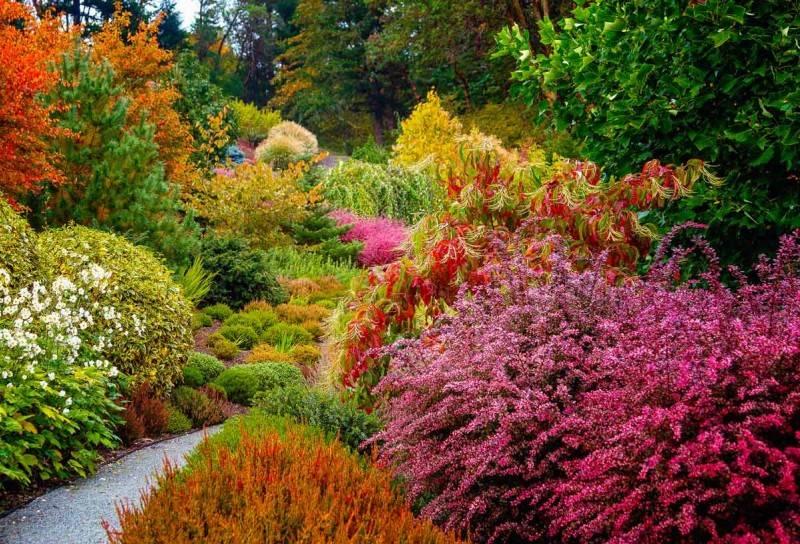 Декоративные деревья и кустарники для озеленения и ландшафтного дизайна сада и дачи: названия многолетних с розовыми цветами, низкорослых и карликовых  - 38 фото