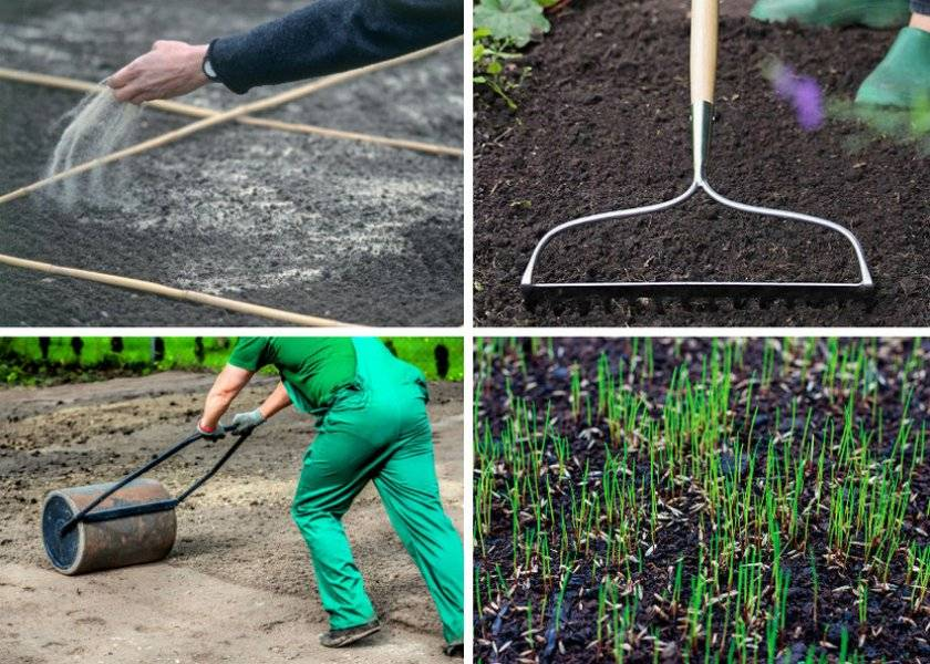 Как сделать газон на даче своими руками и как правильно ухаживать за газоном на участке