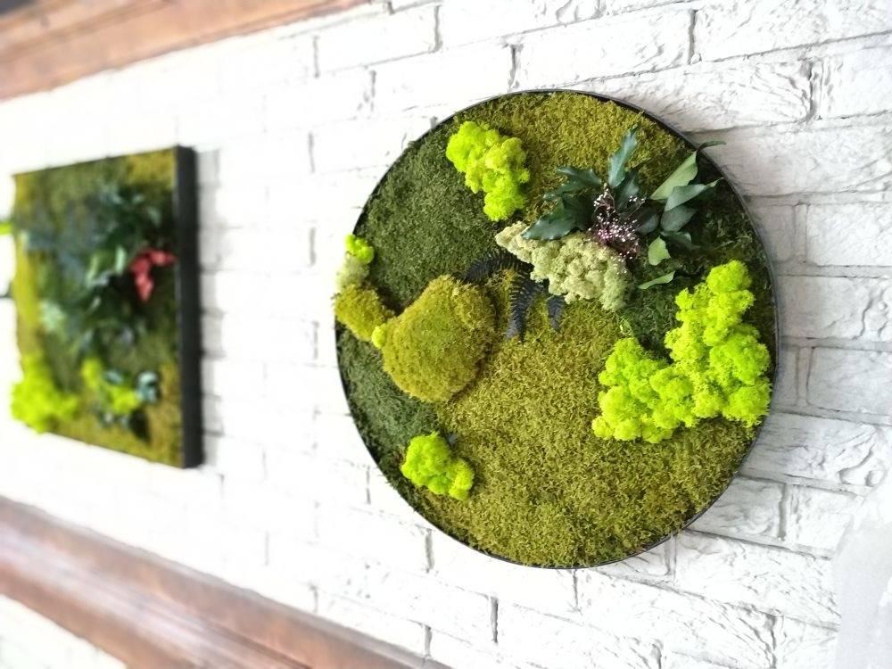 Как сделать картину из мха своими руками: видео уроки по фитодизайну панно и стен - все курсы онлайн