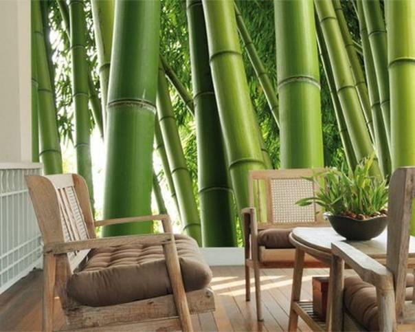 Бамбук для отделки: материалы, мебель, аксессуары