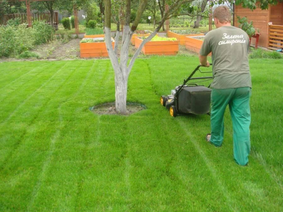 Когда сажать газонную траву? можно ли сеять газон весной или правильно сажать его на даче осенью? при какой температуре лучше растет трава?