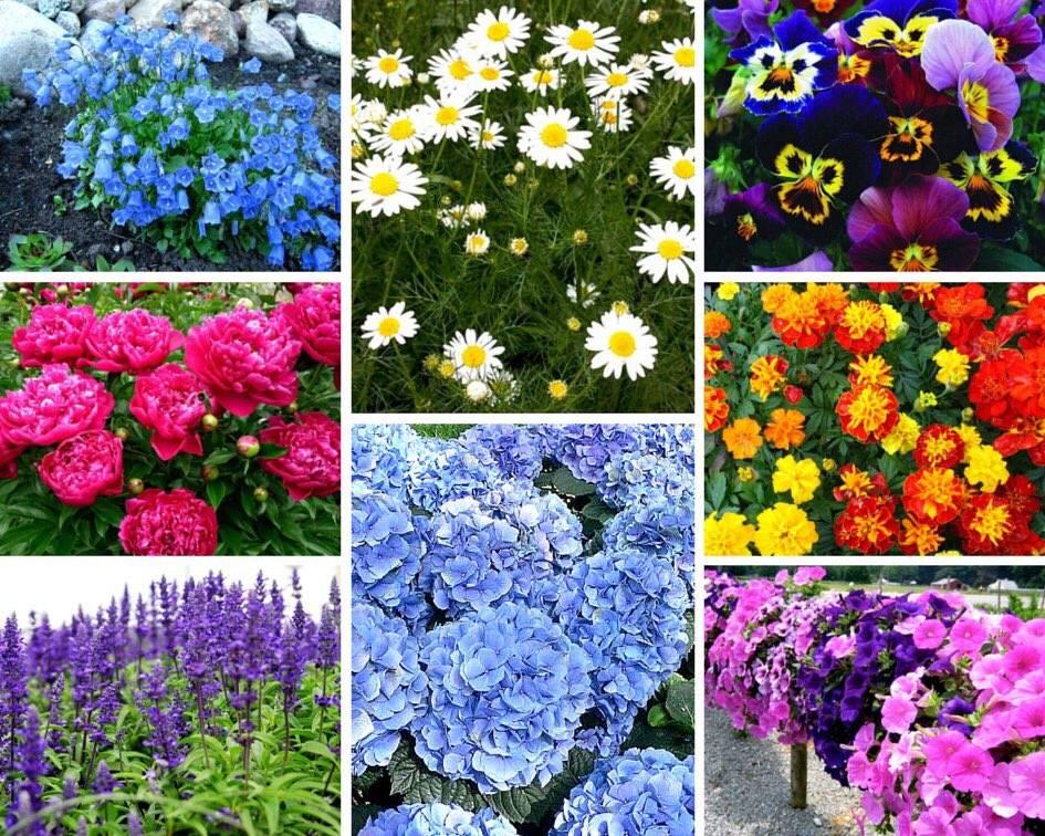 Самые неприхотливые цветы для дачи: фото и названия — sad-fialok.ru — про сад и цветы