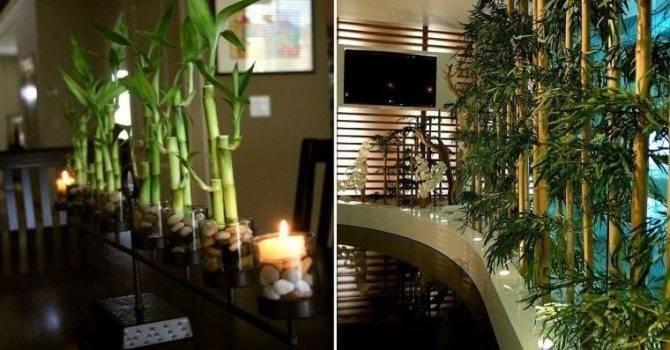 Бамбук в интерьере – новый тренд экодизайна (50 фото идей)