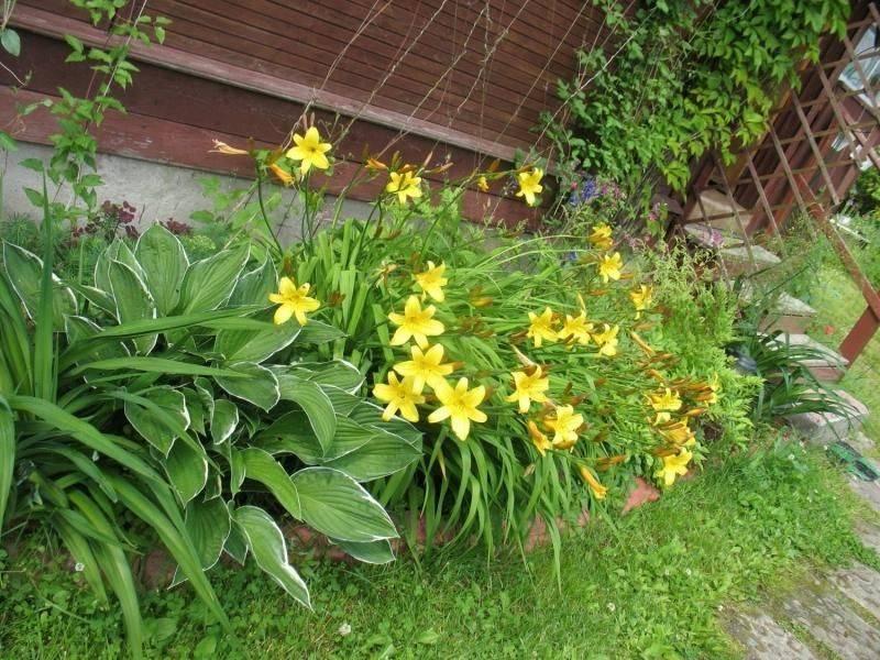 Как правильно оформлять клумбы с хвойниками: лучшие композиции и сочетания растений