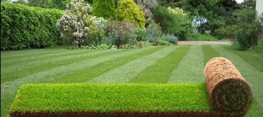 Рулонный газон — виды, особенности выбора и правила укладки