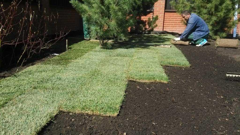 Как посадить газон на даче своими руками?