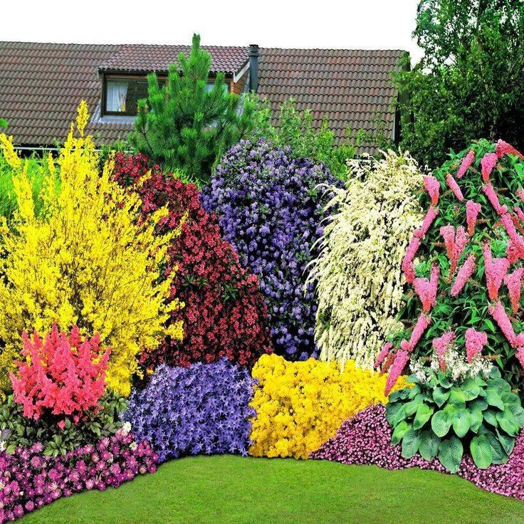 Красивые многолетние кустарники для декора сада