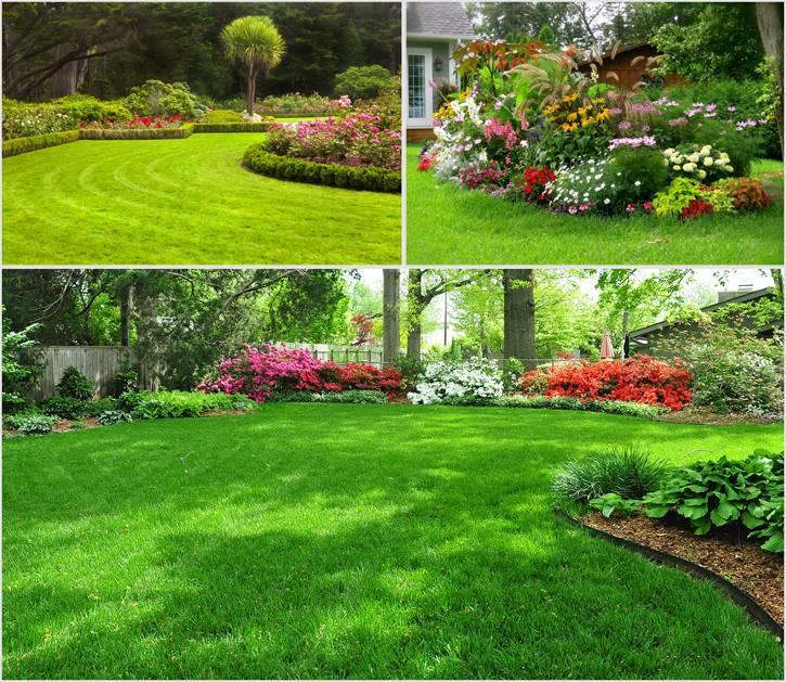 Посадка газонной травы своими руками: пошаговая инструкция, советы, видео