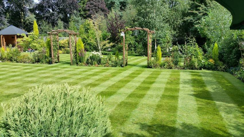 Газон на даче: как правильно делать газон на даче 45 фото примеров