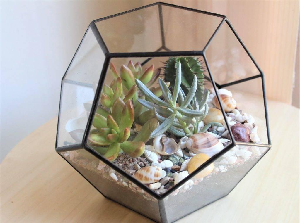 Флорариум своими руками - мастер-класс по созданию своими руками, идеи посадки и оформления + совет в выборе растений и емкости