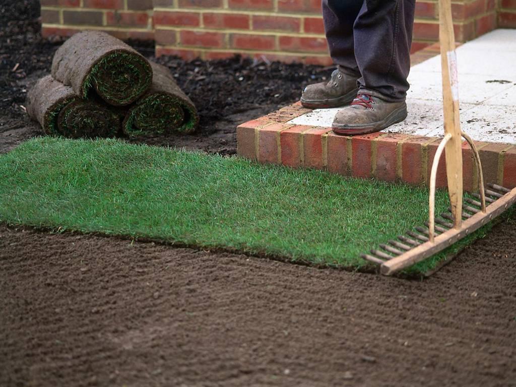 Как посадить газон своими руками: пошаговая инструкция