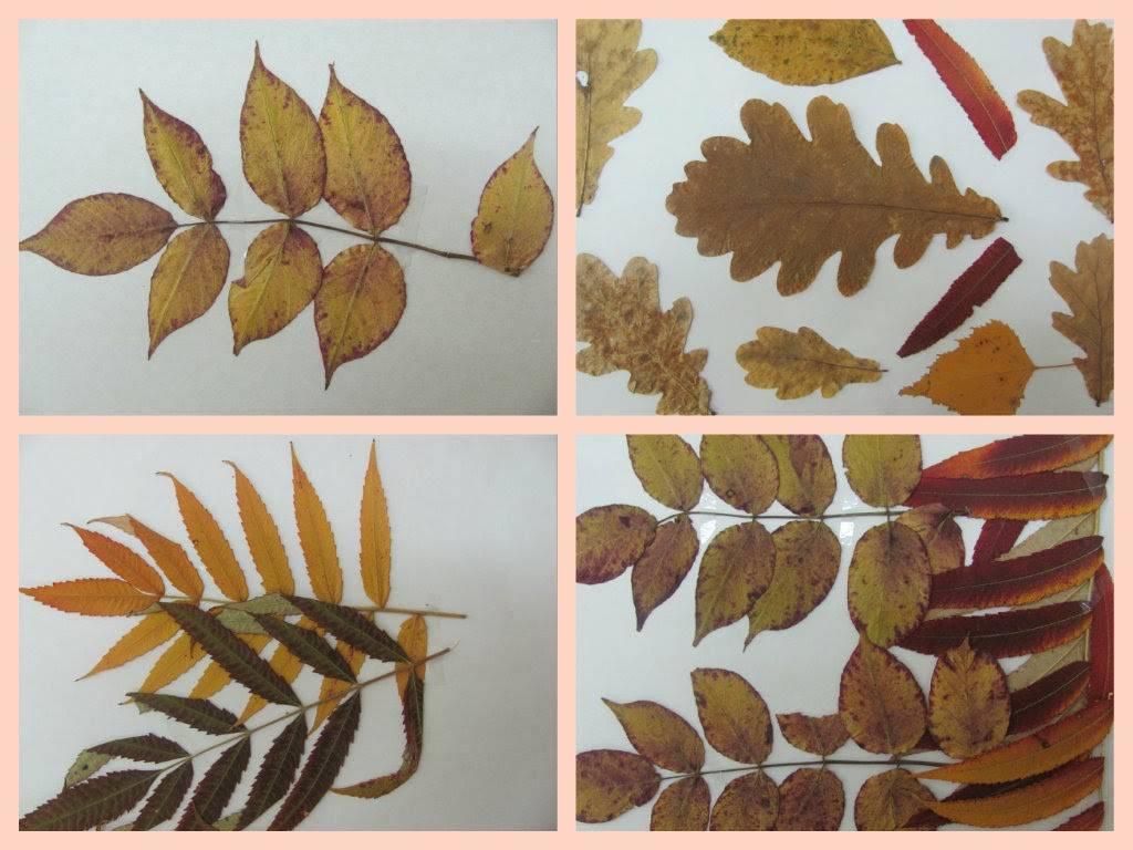 Как сделать гербарий своими руками правильно
