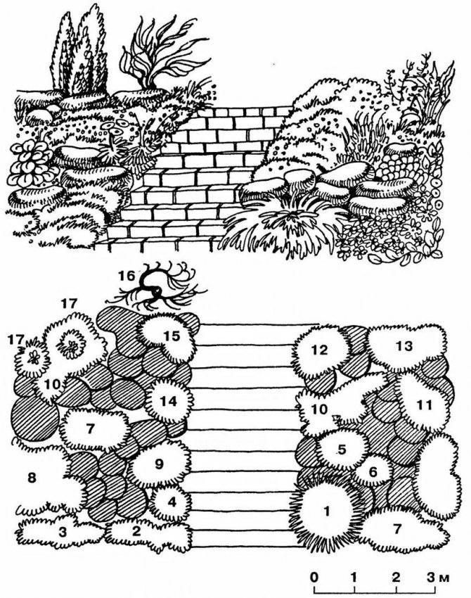 Как создать альпийскую горку с хвойниками: схемы устройства и особенности выбора растений