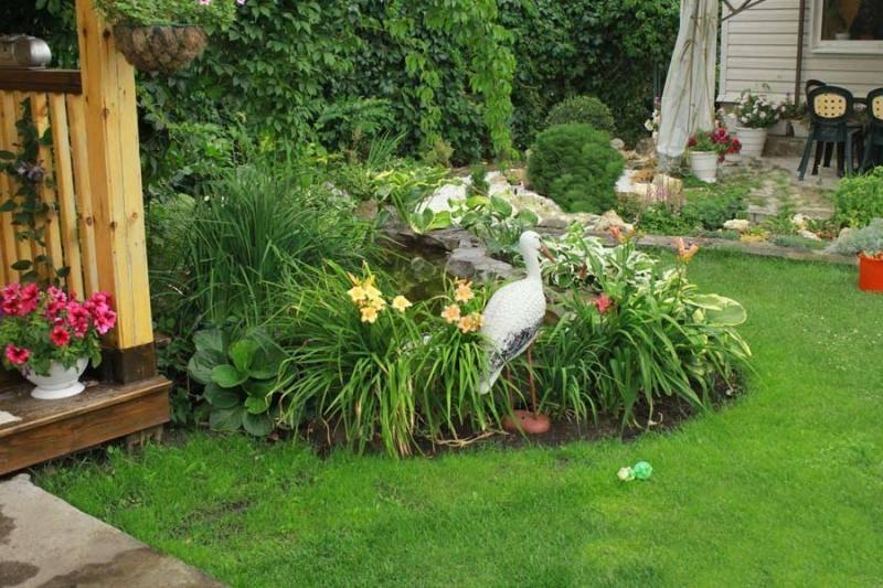 С какими цветами сочетаются лилейники в ландшафтном дизайне сада: виды растений и фото