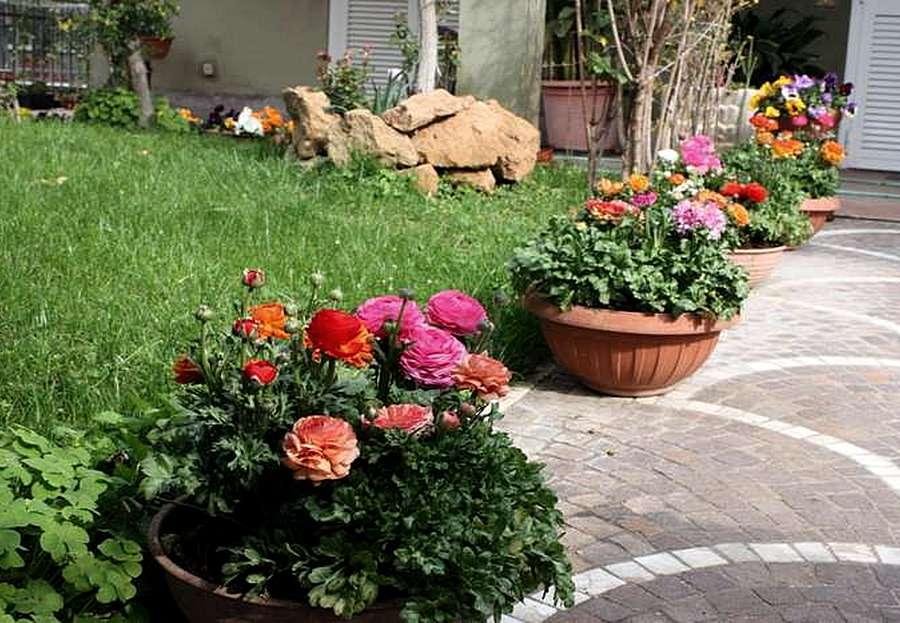Императа (22 фото): описание травы из семейства злаки, использование в ландшафтном дизайне, посадка и уход за растением в открытом грунте