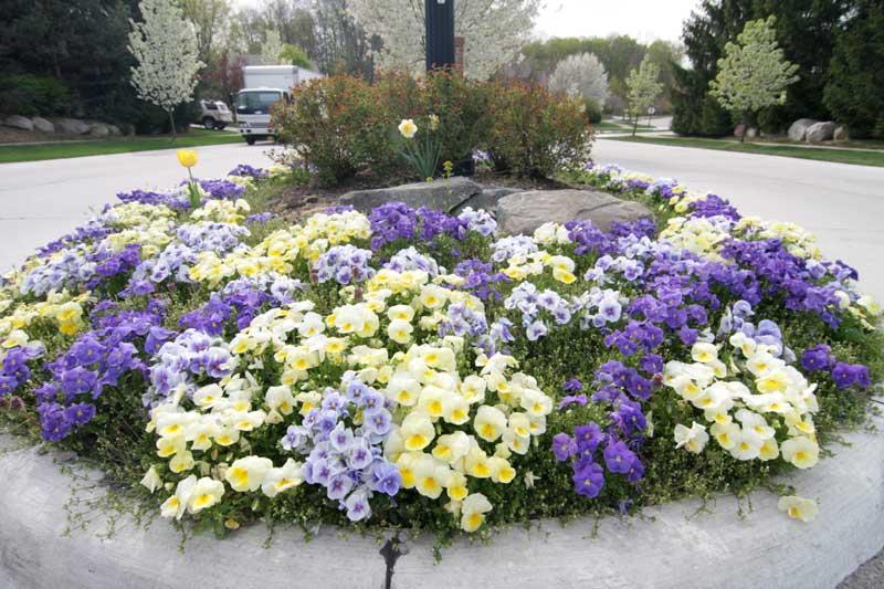 Садовые растения: декоративные вечнозеленые и лиственные кустарники, садово-парковые растения для дачи и их совместимость