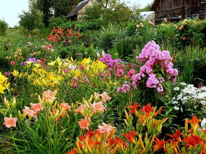 Лилейник в дизайне сада: примеры композиций, виды и сорта, советы по выращиванию