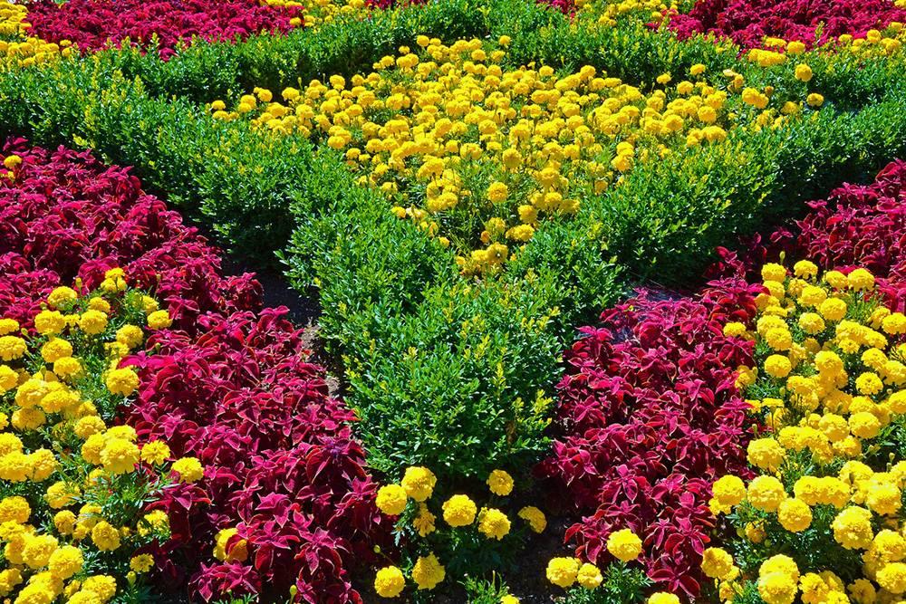 Цветы на участке: неприхотливые и красивые однолетки