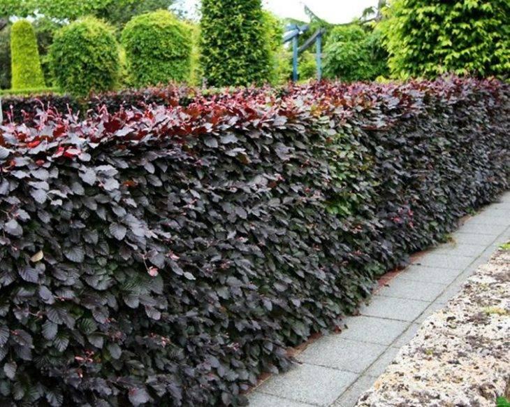 Выбираем живую изгородь: подходящие растения и уход за ними + красивые примеры