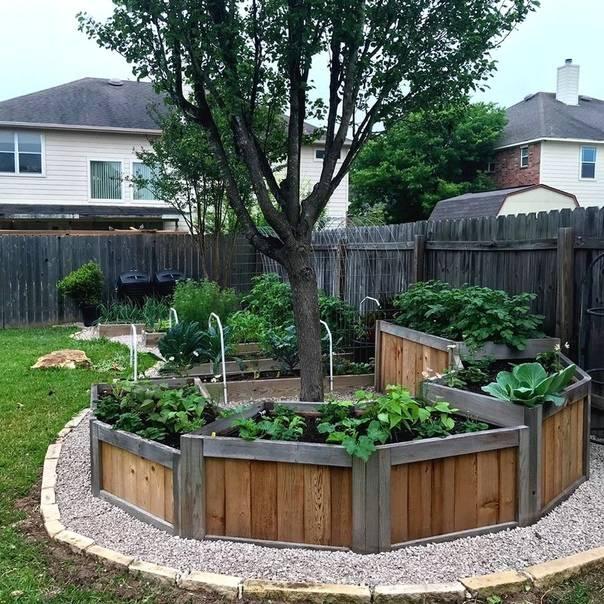 Деревянные грядки (41 фото): как сделать их своими руками для огорода? высокие грядки из дерева и другие виды для дачи. чем обработать доски?