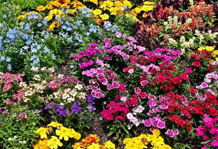 Декоративные растения: самые красивые цветы-многолетники для сада, неприхотливые долгоцветущие для дачи  - 36 фото