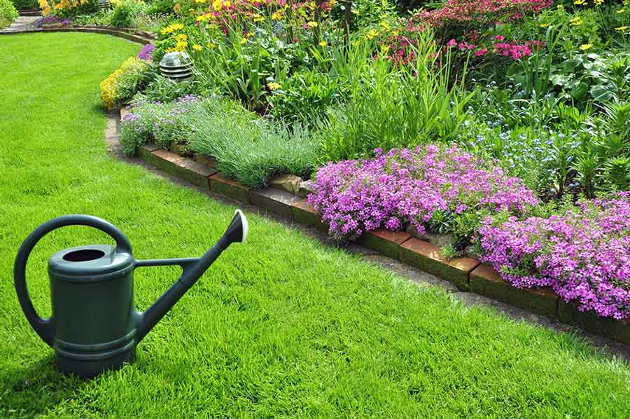 Идеальный газон своими руками: как и когда лучше всего сеять газонную траву? - огород, сад, балкон - медиаплатформа миртесен
