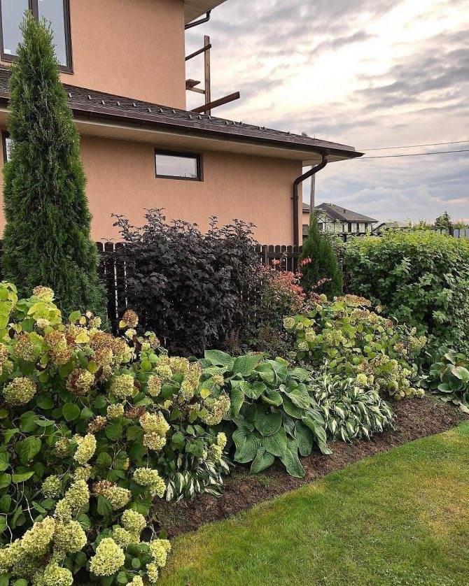 Живая изгородь на даче своими руками: какие растения лучше выбрать, пошаговый процесс монтажа
