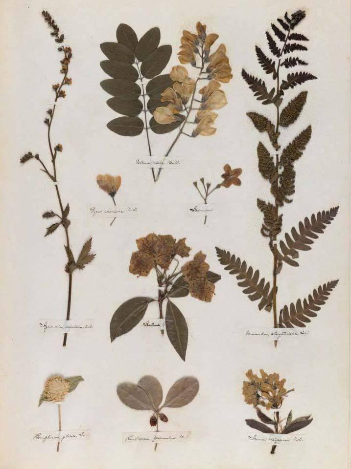 Как сделать гербарий своими руками в школу, фото, видео. как засушить, оформить гербарий