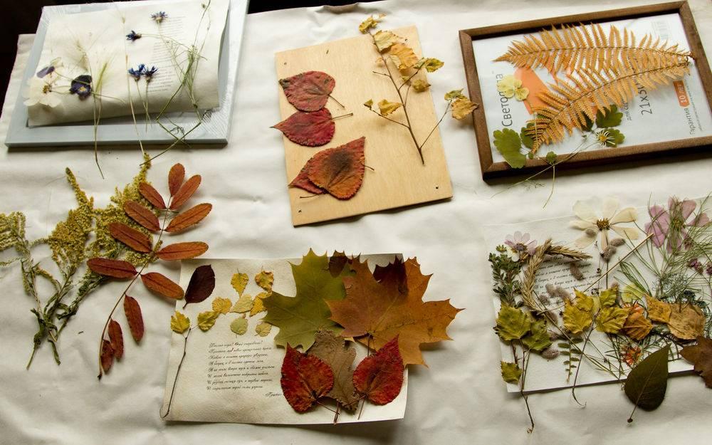 Гербарий из листьев своими руками - это очень просто