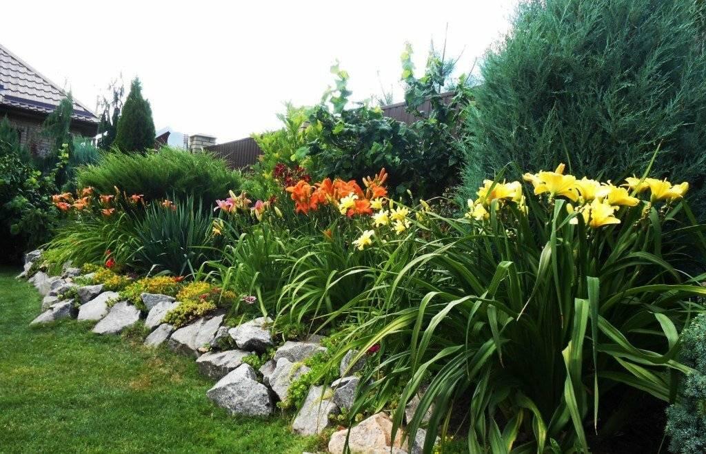 Лилейники в дизайне сада: с какими цветами сочетается, фото и схемы посадки [2019]