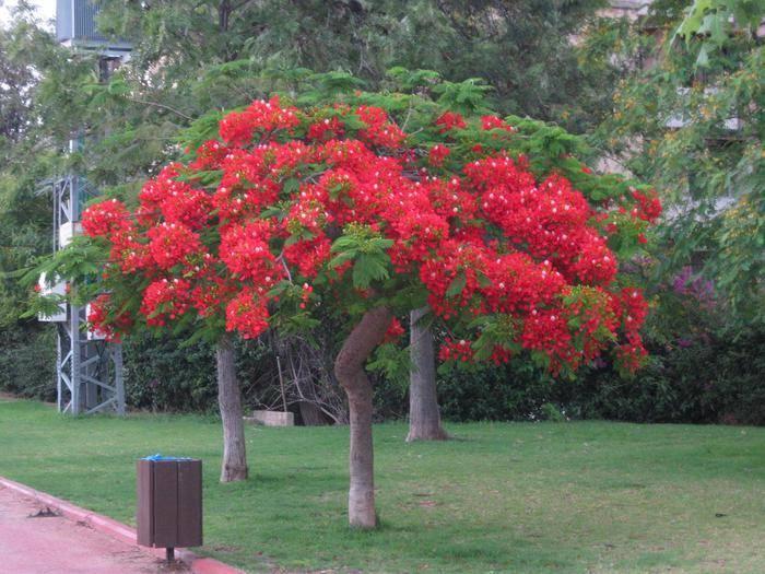 Невысокие декоративные деревья: описания, разновидности, фото