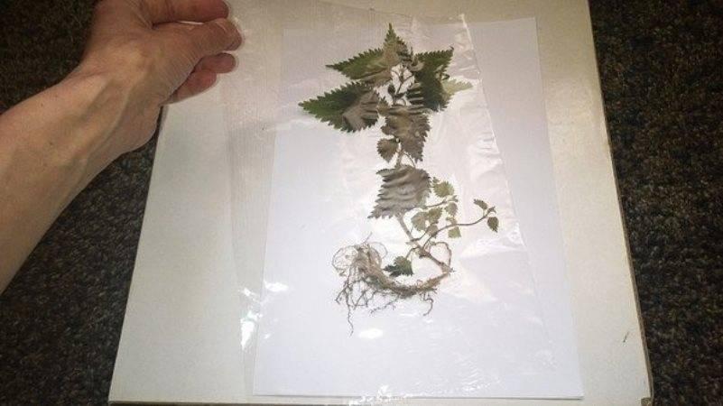 Как сделать гербарий своими руками. гербарий для младшей школы