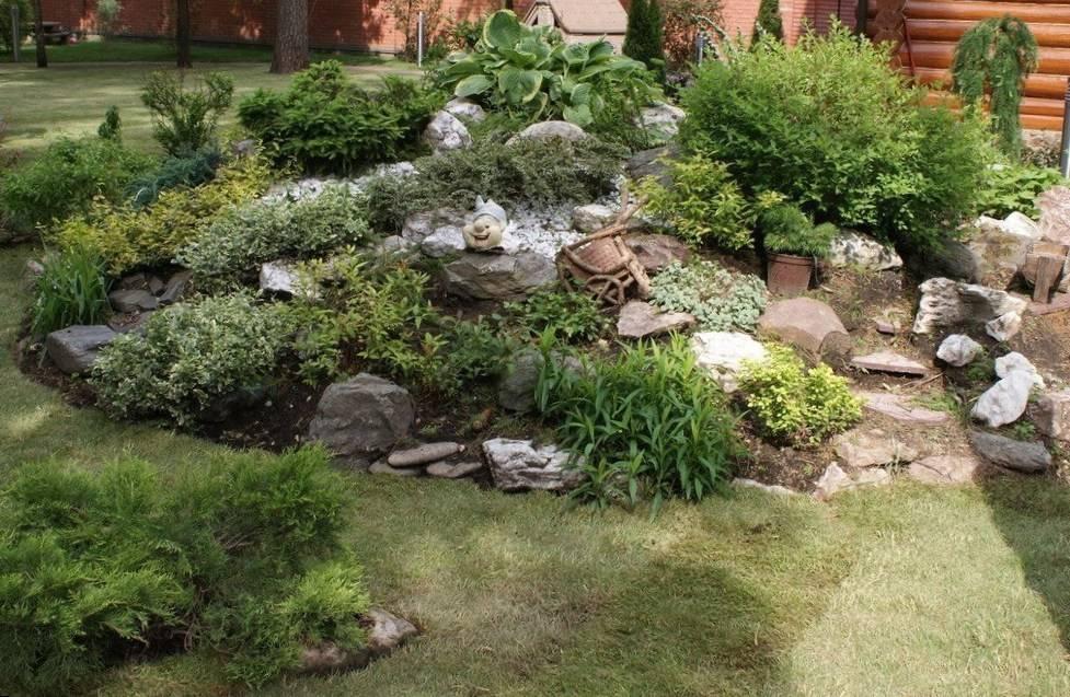 Альпийская горка - 84 фото самого популярного растения для дизайна