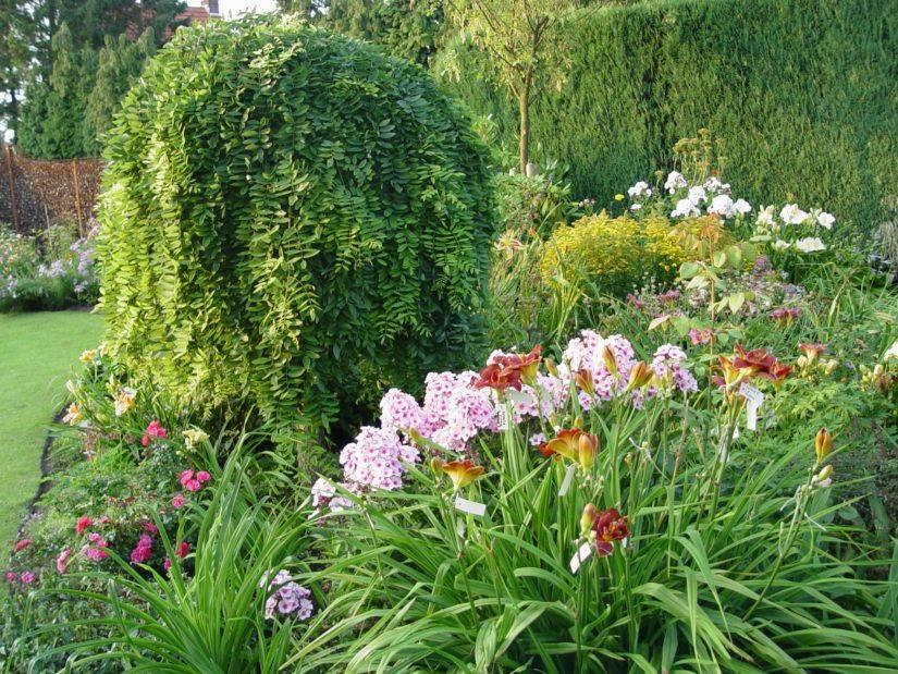 Лилейники в ландшафтном дизайне, популярные сорта, особенности выращивания и дизайн композиций с другими растениями - 19 фото