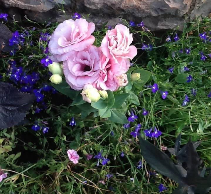 Клумба из многолетников для начинающих: цветы с названиями и фото для клумбы, схемы, видео