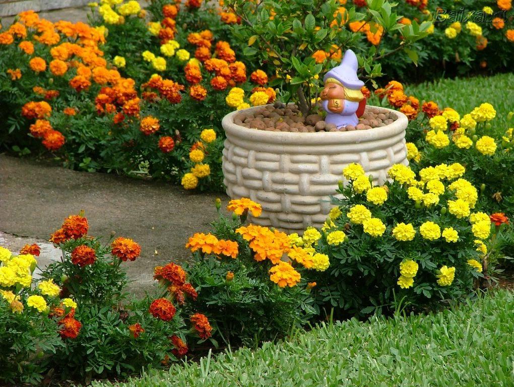 Красивый ландшафтный дизайн с циниями в саду — фото оформления клумбами