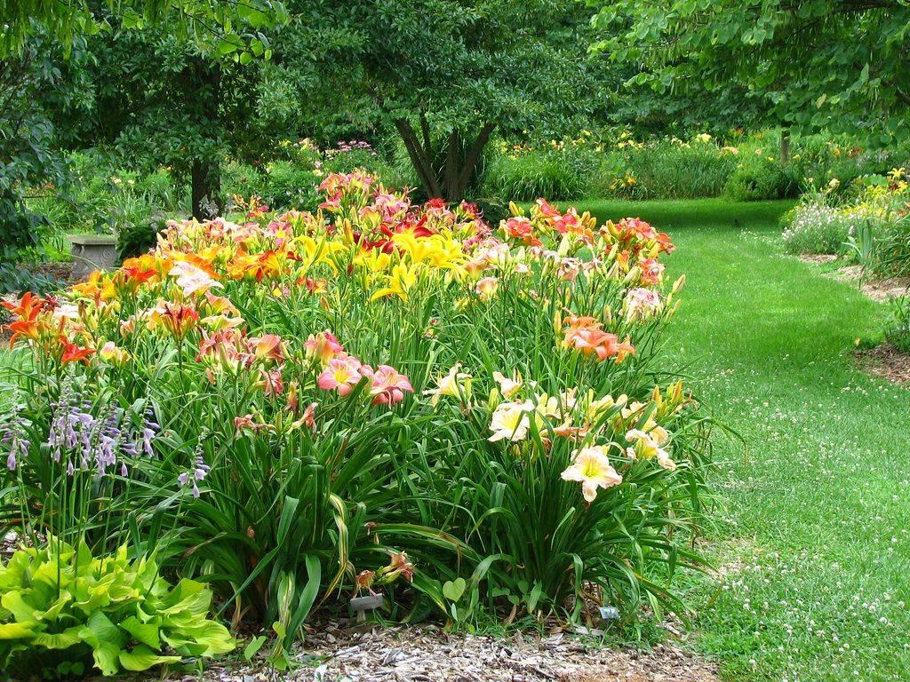 Хосты в саду: ландшафтные хитрости, где и с чем посадить на клумбе, лучшие соседи, дизайн с астильбами и лилейниками  - 11 фото