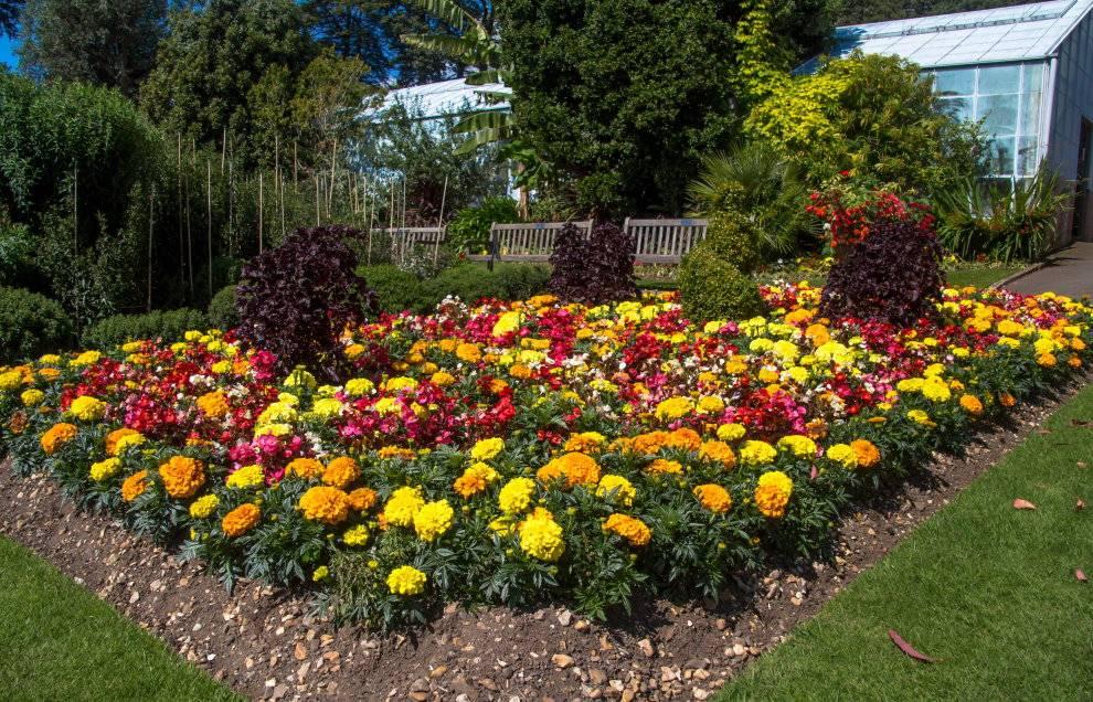 Клумбы из хвойников: схема посадки с названиями, дизайн перед домом с можжевельником, цветами, розами, камнями и туей  - 27 фото