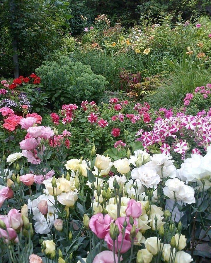 Ландшафтный дизайн в саду с эустомами — красивые композиций из цветов