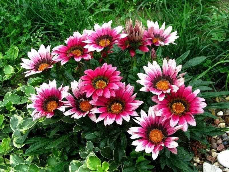 Лучшие низкорослые цветы для клумбы, цветущие все лето – дачные дела