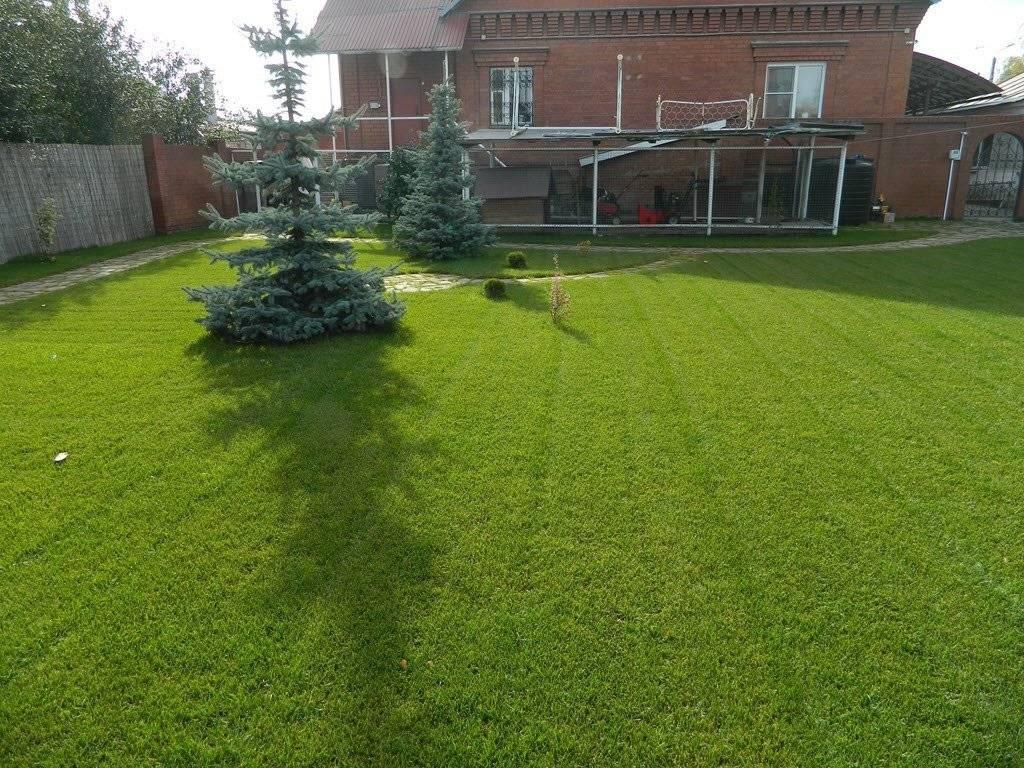 Газонная трава как сажать и ухаживать. подготовка удобрение почвы