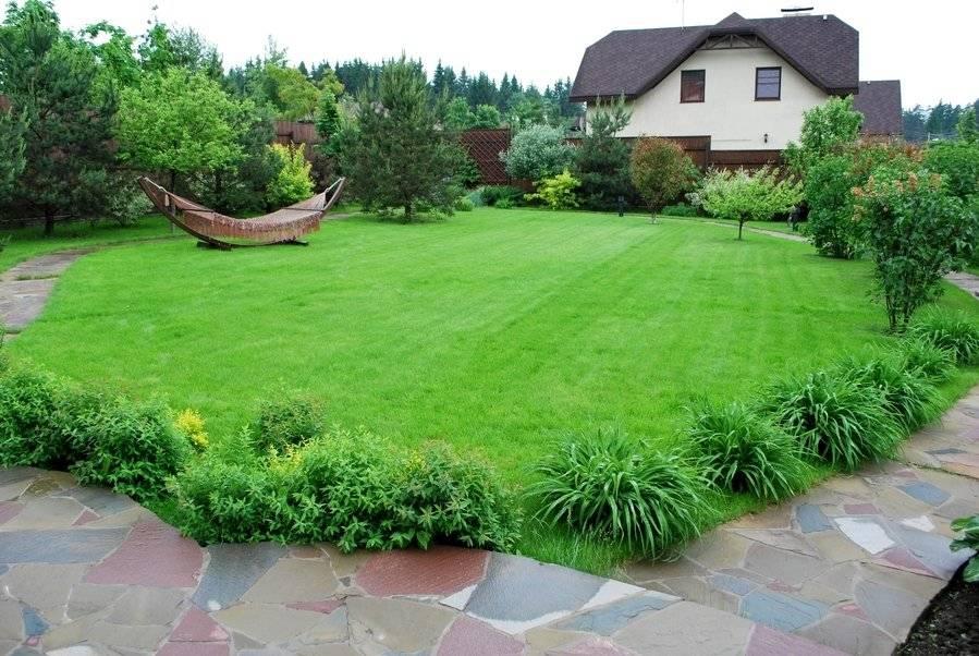 Как подсеять газон?  подсев весной газонной травы на уже растущий? как после зимы правильно подсевать семена?