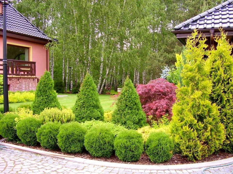 Тенелюбивые кустарники для сада многолетние: топ-100 фото с названиями, краткие описания, особенности, цветущие все лето, список видов