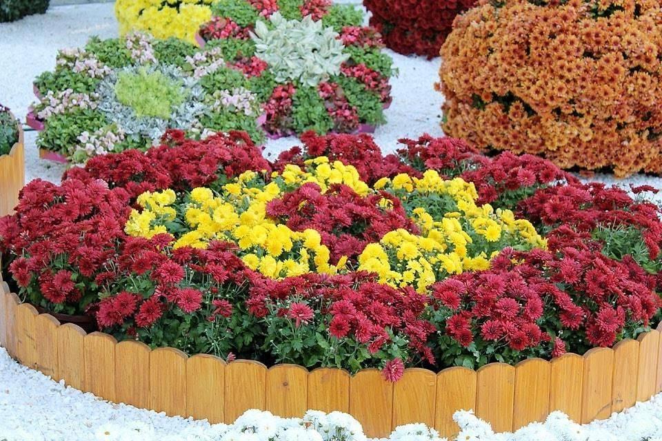 Клумбы из многолетних цветов фото и готовые схемы