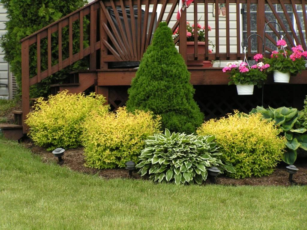 Цветы на участке (54 фото): для тенистых участков дома и других. цветник, который долго цветет. интересные идеи оформления участка цветами
