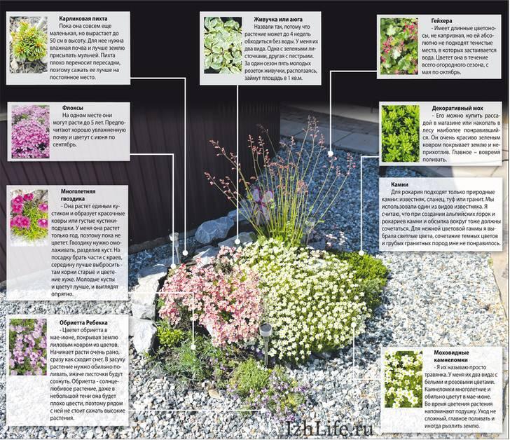 Топ-23 растения для альпийской горки | (80+ фото)