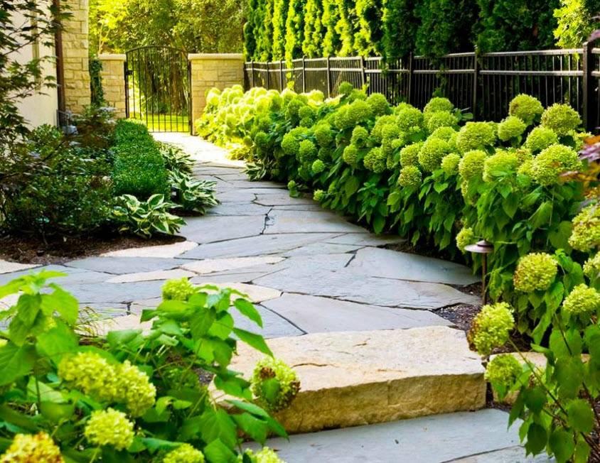 10 лучших растений для формирования живой изгороди на участке