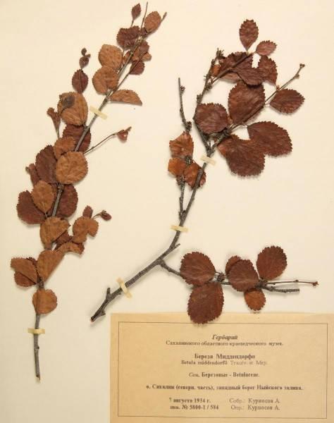 Как сделать гербарий своими руками? гербарий по биологии. гербарий из листьев :: syl.ru