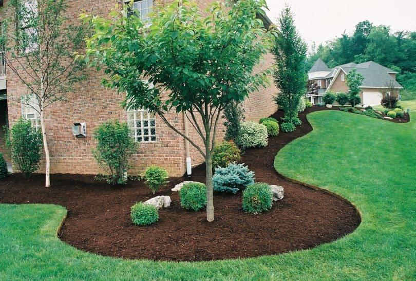 Как сеять газонную траву: от выбора вида газона до посадки семян